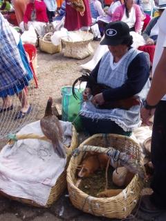 Animal_market_1