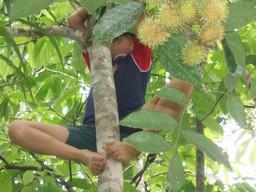 Boy_in_tree5