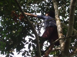 Boy_in_tree_3