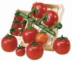 Er12020_21_30_tomatoes_vine